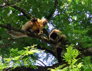 umwelt-und-tierschutz-in-paraguay-2